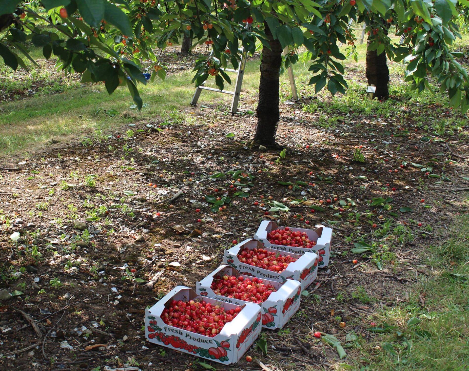 Seasonal Harvest Staff Brogdale Collections