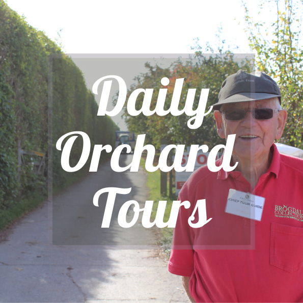 Brogdale Collections Daily Orchard Tours
