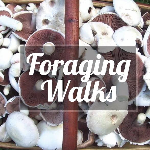 Foraging-Walks-207.21×207.21