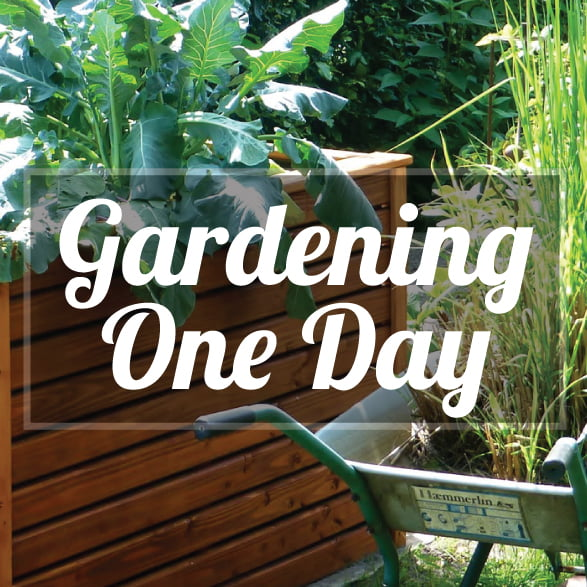 Gardening: One Day Introductory Courses
