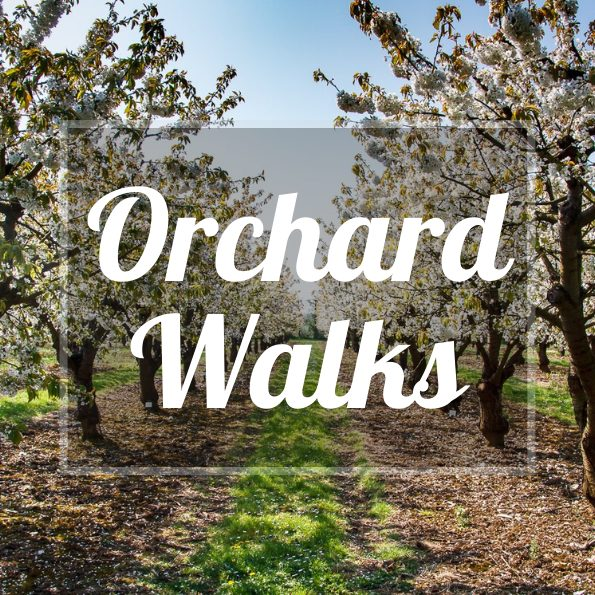 Brogdale Collections Orchard Walks