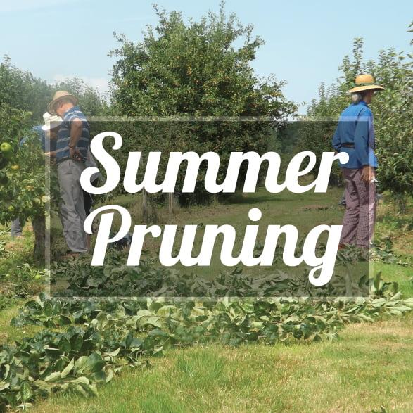 Half Day Summer pruning