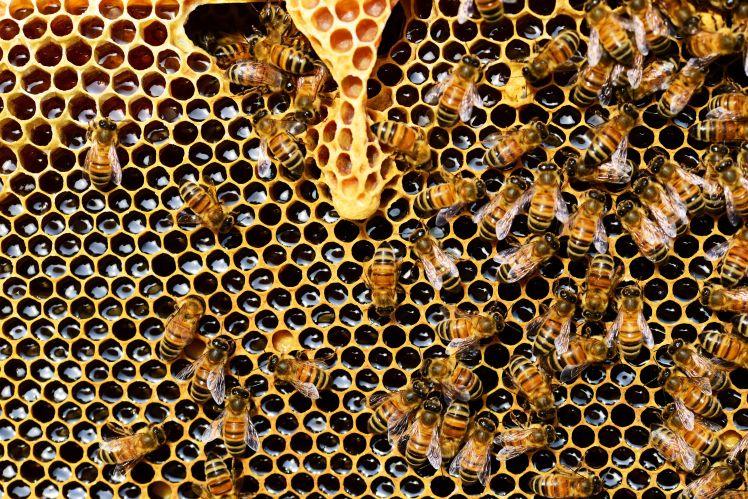 bees at brogdale