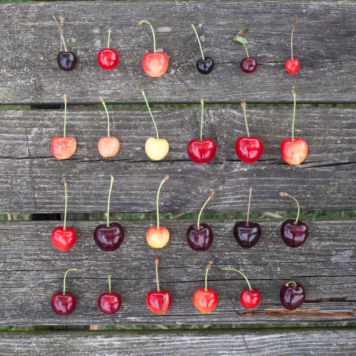 Brogdale Cherries
