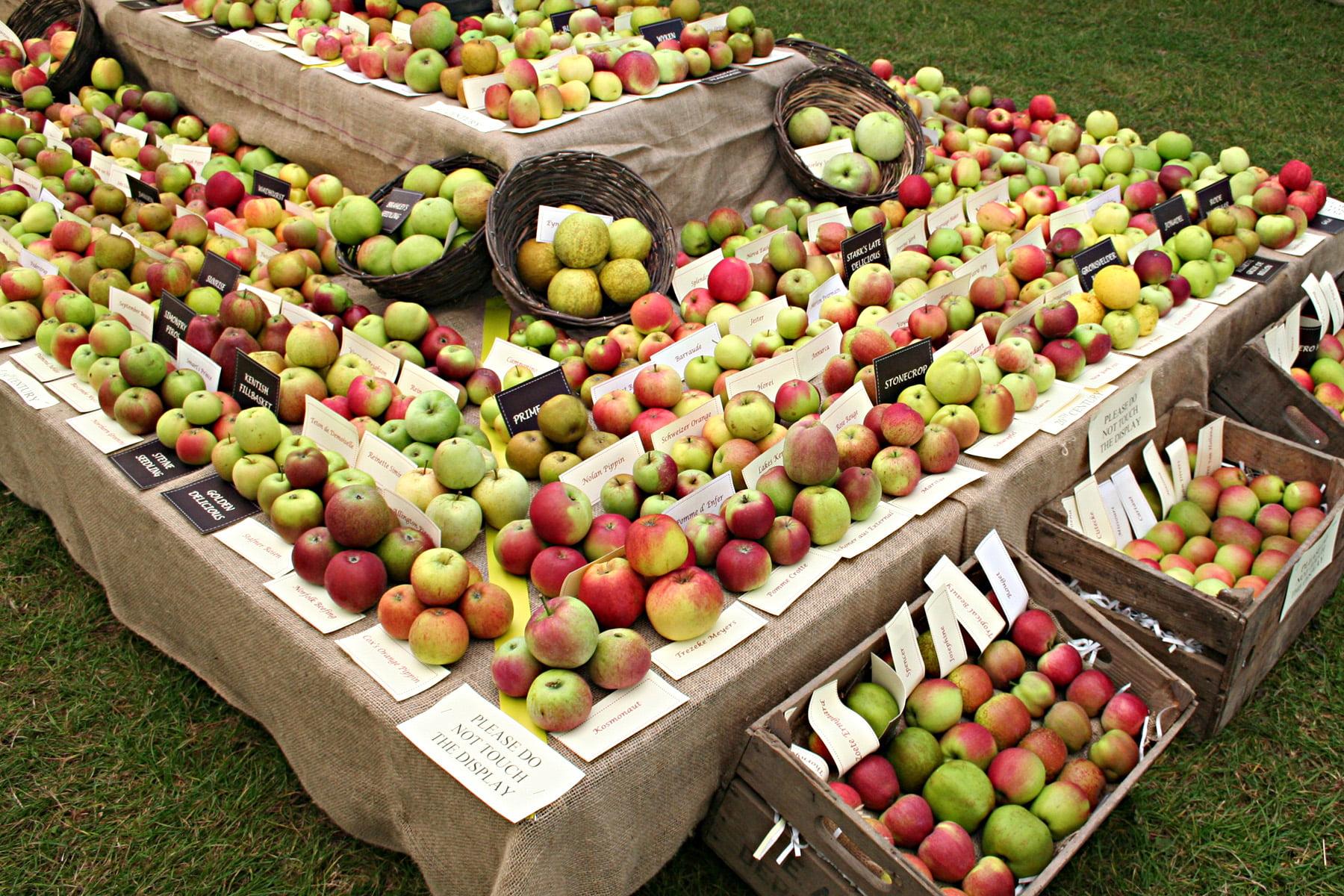 Apple Festival 1