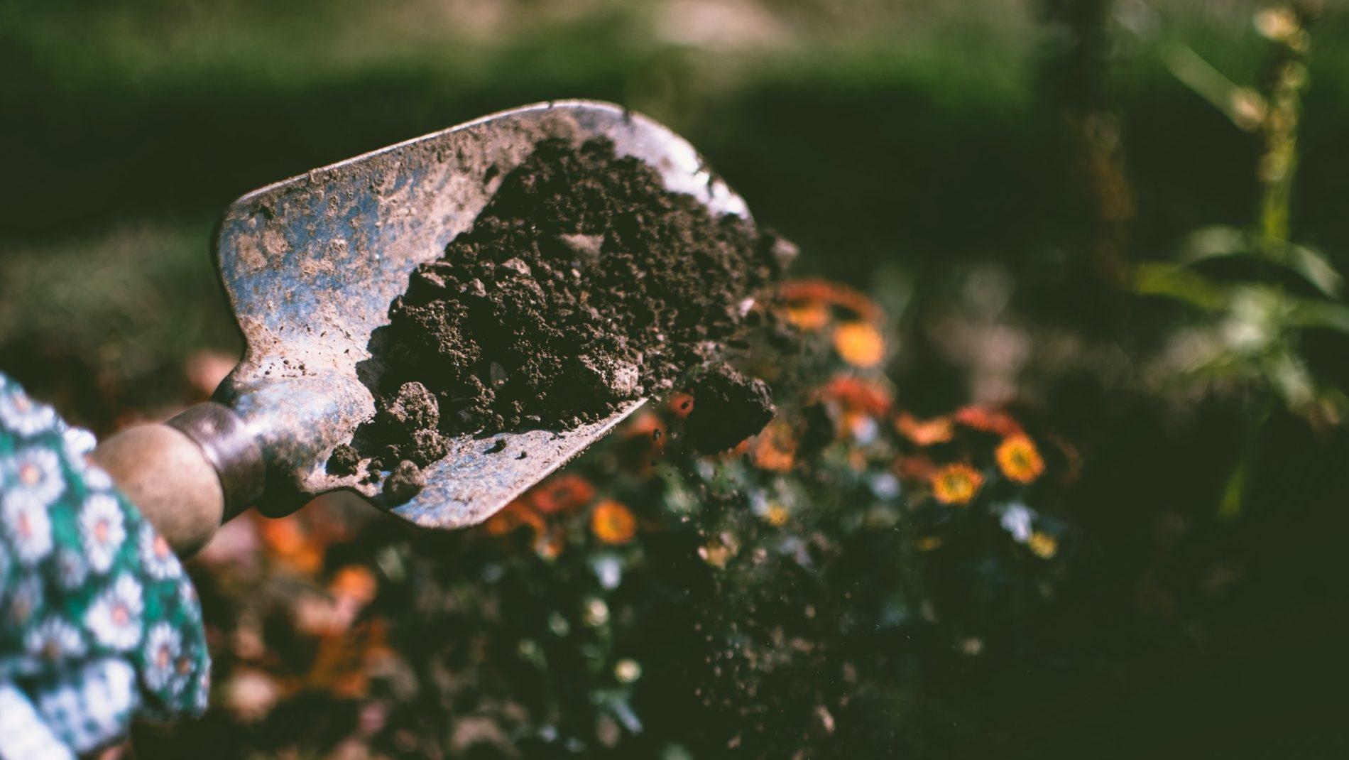 one day gardening