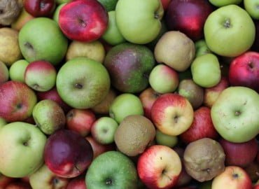 Brogdale Collections apples