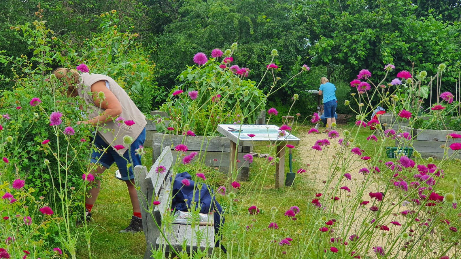 A time for weeding and enjoying the wildlife
