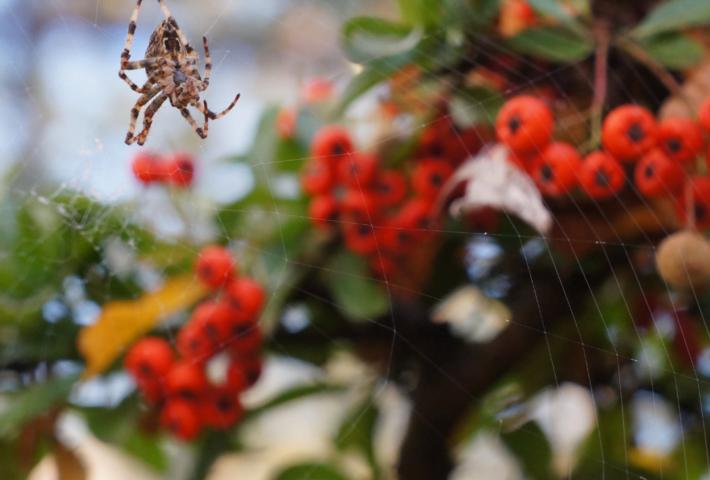 Autumn wildlife at Brogdale