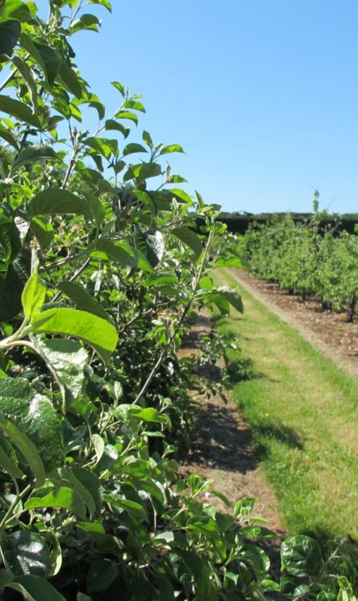brogdale collections orchard